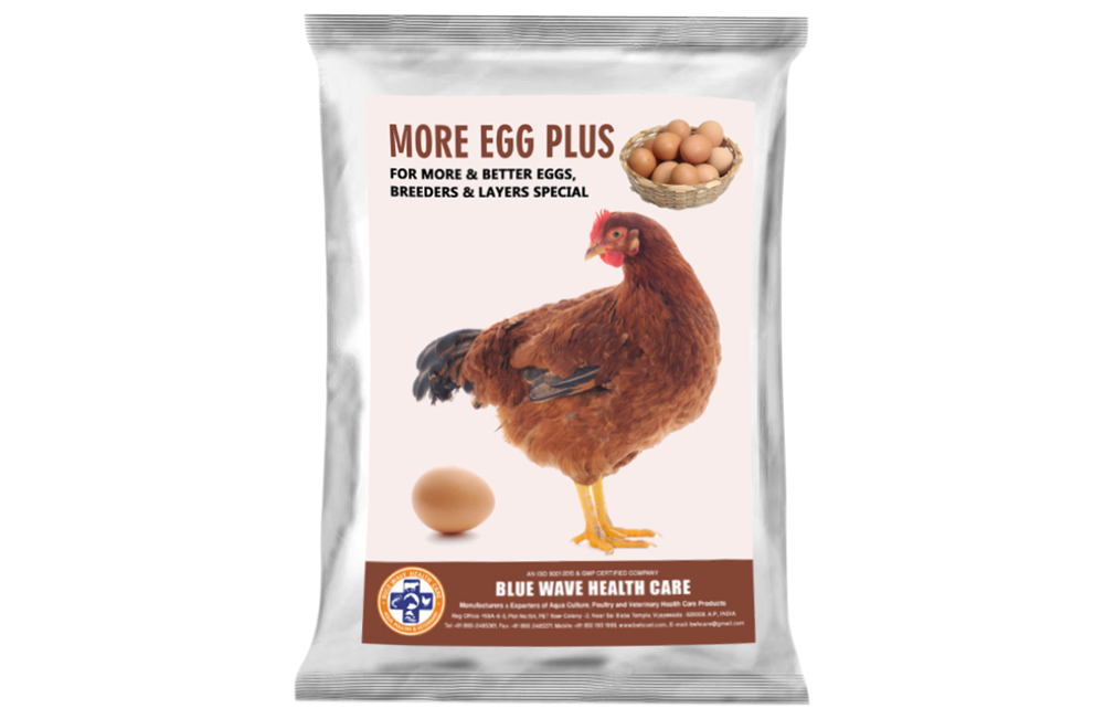 MORE EGG PLUS (For more & better Eggs, Breeders & Layers Special)
